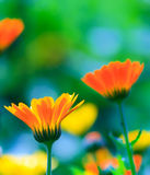 Цветки на красочной предпосылке Стоковое Изображение RF
