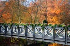 Цветки на мосте Природа в осени Стоковые Изображения