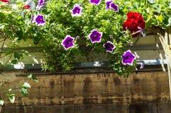 Цветки на окне стенда в Загребе Стоковые Изображения RF