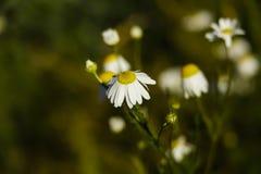 Цветки на долине Стоковое фото RF