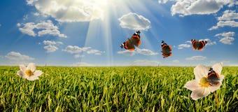 Цветки на панораме glade Стоковые Изображения