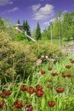 Цветки на парке потехи Стоковые Изображения