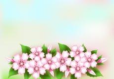 Цветки на пастельном цвете, предпосылке природы иллюстрация вектора