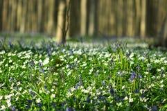 Цветки на переднем плане стоковое изображение rf