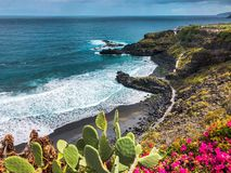 Цветки на пляже стоковая фотография rf