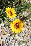 Цветки на пляже стоковое изображение rf