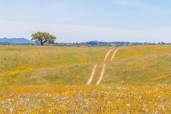 Цветки на поле и дороге фермы в Вейл Seco, Сантьяго делают Cacem Стоковая Фотография RF