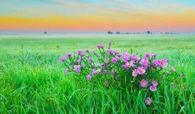 Цветки на поле Стоковые Изображения