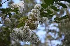 Цветки на поле Стоковое фото RF
