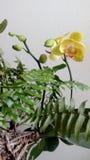 Цветки на поле Стоковое Фото