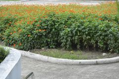 Цветки на предпосылках Колизея Davao del Sur, Matti, город Digos, Davao del Sur, Филиппины стоковое фото rf