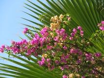 Цветки на предпосылке ветвей ладони Стоковое Изображение RF
