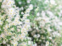 цветки на предпосылке зеленого цвета нерезкости Стоковые Фото