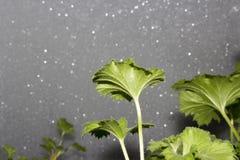 Цветки на предпосылке морозного Windows Стоковая Фотография RF