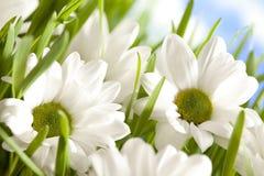 Цветки на предпосылке природы Стоковые Изображения