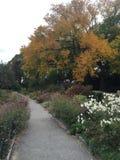 Цветки на пути Стоковая Фотография