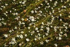 Цветки на реке Стоковая Фотография
