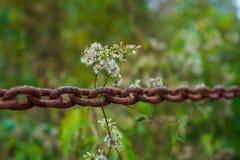 Цветки на ржавой цепи стоковые фото