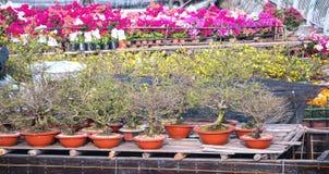 Цветки на рынке цветка вдоль причала канала Стоковые Фото