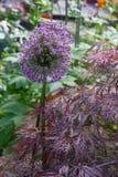 цветки на саде коттеджа стоковая фотография rf