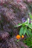 цветки на саде коттеджа стоковые фото