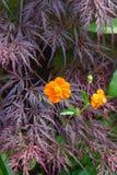 цветки на саде коттеджа стоковое фото