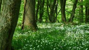 Цветки на свежий день сток-видео