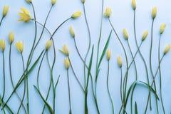 Цветки на свете - голубой предпосылке Стоковое Изображение
