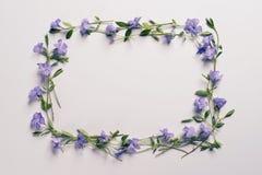 Цветки на светлой предпосылке Стоковые Фотографии RF