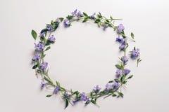Цветки на светлой предпосылке Стоковое Изображение