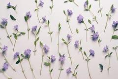 Цветки на светлой предпосылке Стоковая Фотография