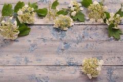 цветки на старой голубой деревянной предпосылке Стоковая Фотография