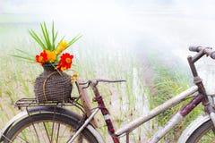 Цветки на старой корзине Стоковое фото RF