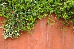 Цветки на стене Стоковое фото RF