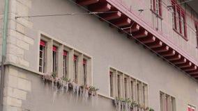Цветки на строя стене сток-видео
