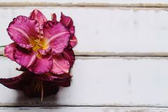 Цветки на таблице Стоковое Фото