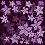Цветки на темной предпосылке Стоковое фото RF