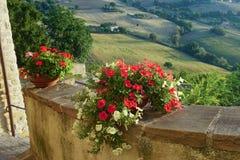 Цветки на террасе Стоковая Фотография RF