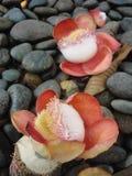 Цветки на утесах Стоковые Фотографии RF