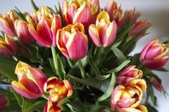 Цветки на фото окна стоковые изображения