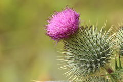 Цветки на criffel стоковое фото