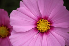 Цветки на criffel стоковое изображение