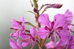 Цветки на criffel стоковые изображения rf