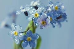 Цветки незабудки в падениях воды стоковые изображения