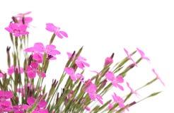 цветки немногая пурпуровое стоковое фото rf