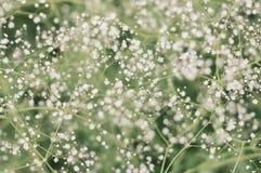 цветки немногая Стоковые Изображения