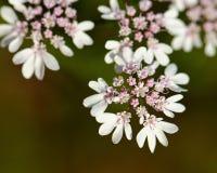 цветки немногая Стоковые Фотографии RF