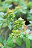 цветки немногая Стоковое Фото