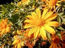 Цветки ноготк дерева Стоковые Изображения