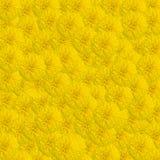 Цветки ноготк Стоковая Фотография RF